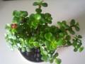 炎炎夏日 为何绿色小盆栽更受宠?