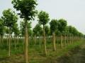 夏季苗木管理要点收录