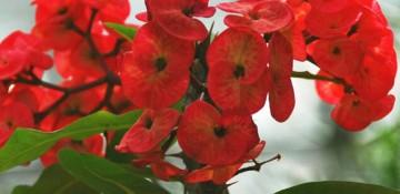 花卉夏季养护全套教程