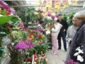 武汉花卉市场