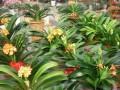 石家庄西三教花卉市场