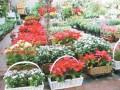 赤峰天虹花卉市场