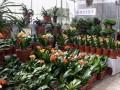 天津曹庄花卉市场