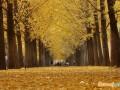 江苏省花和省树是什么