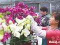 镇江润州区2万多株蝴蝶兰被预订一空