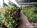 湛江花市各种盆栽价格普遍上涨