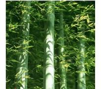 供应刚竹、早园竹、毛竹