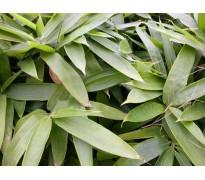 竹类植物售价金镶玉竹、箭竹水竹丛竹、茶杆竹四季竹佛肚竹孝顺竹