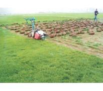 草坪草籽价格:百慕大草、麦冬草、马尼拉草、邹菊矮牵牛、结缕草